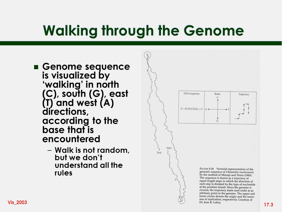 17.3 Vis_2003 Walking through the Genome n Genome sequence is visualized by walking in north (C), south (G), east (T) and west (A) directions, accordi