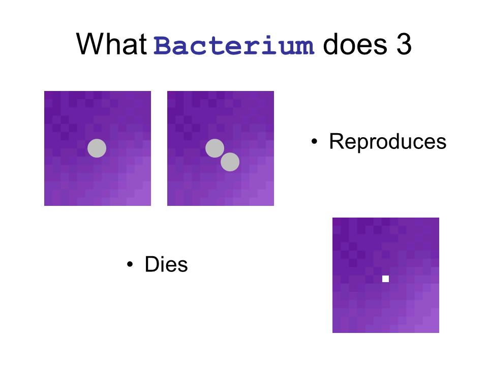 What Bacterium does 3 Reproduces Dies