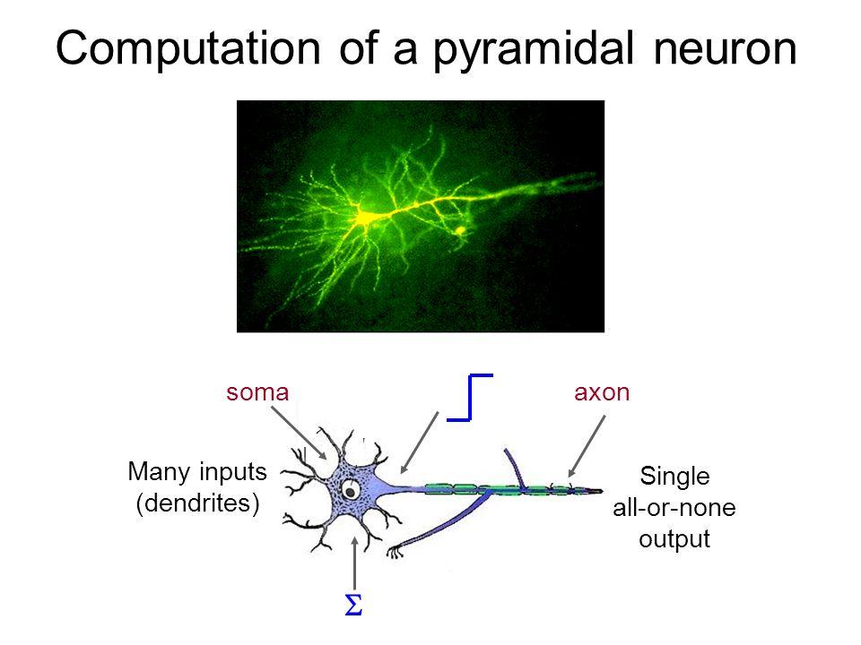 Computation of a pyramidal neuron Single all-or-none output Many inputs (dendrites) soma axon