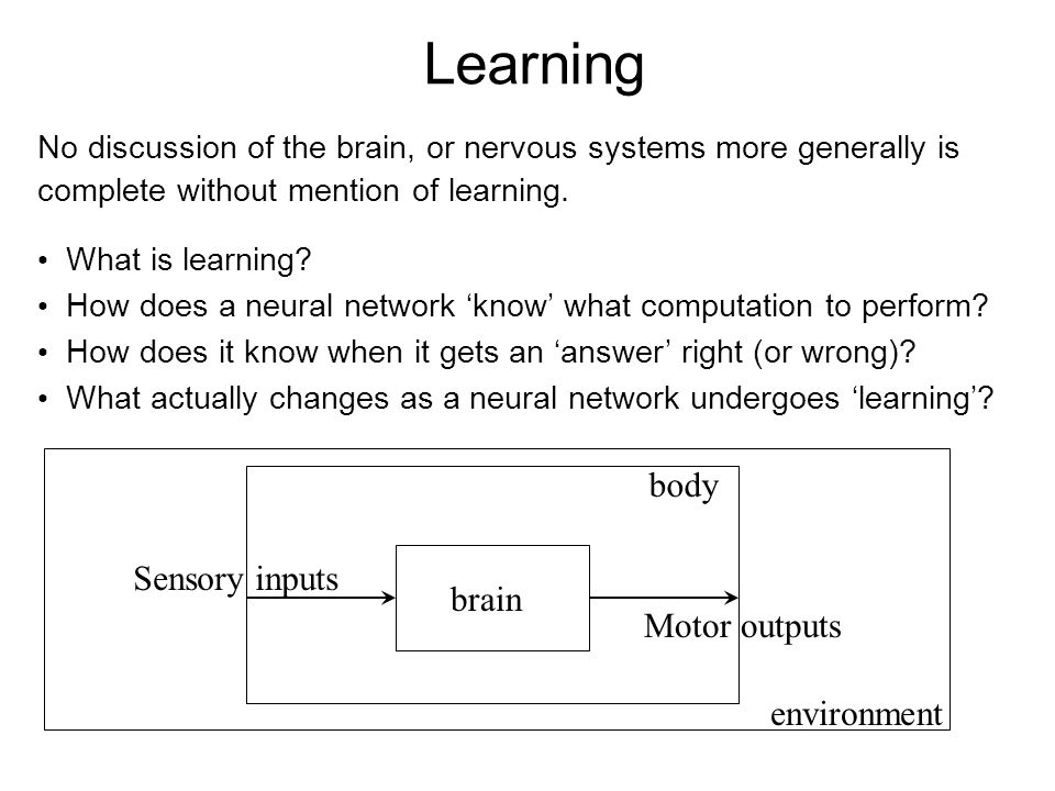 Learning No discussion of the brain, or nervous systems more generally is complete without mention of learning. What is learning? How does a neural ne