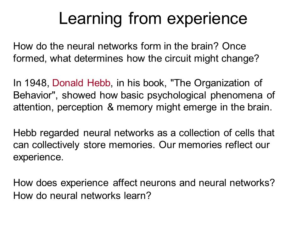 How do the neural networks form in the brain? Once formed, what determines how the circuit might change? Learning from experience In 1948, Donald Hebb