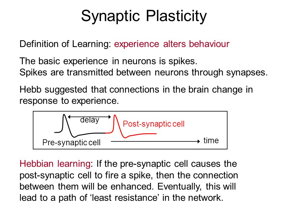 Synaptic Plasticity Definition of Learning: experience alters behaviour The basic experience in neurons is spikes. Spikes are transmitted between neur