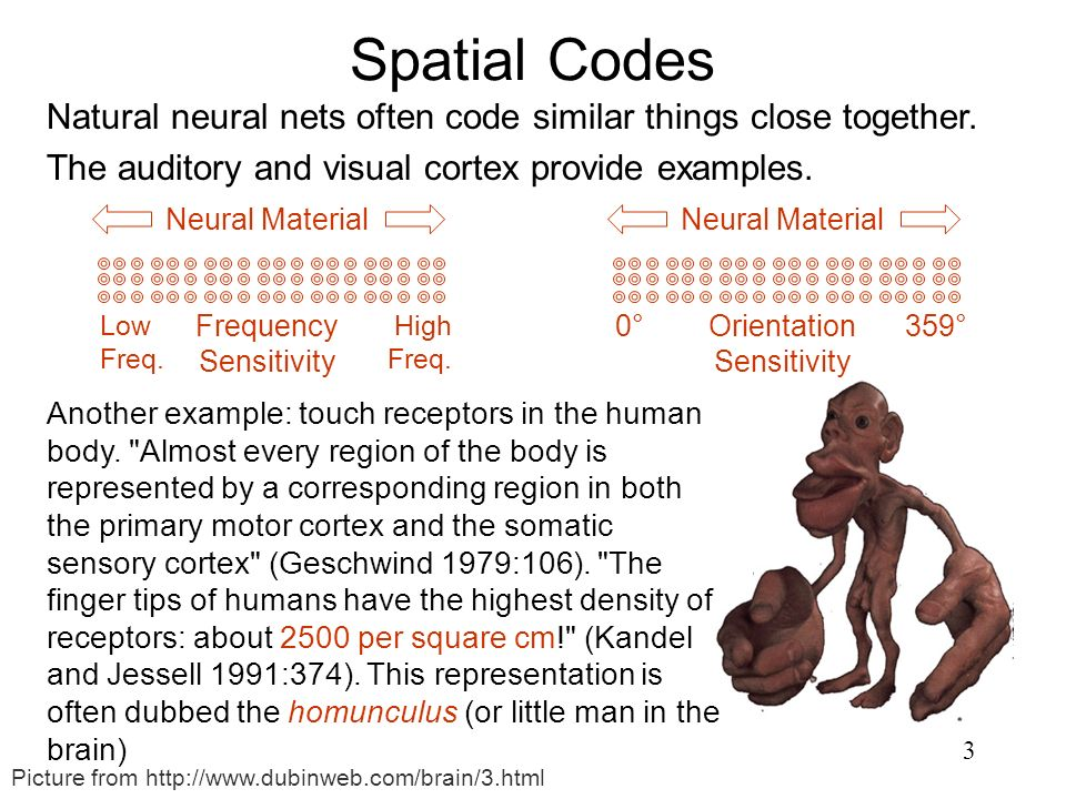 3 Spatial Codes Natural neural nets often code similar things close together. The auditory and visual cortex provide examples. Neural Material Low Fre