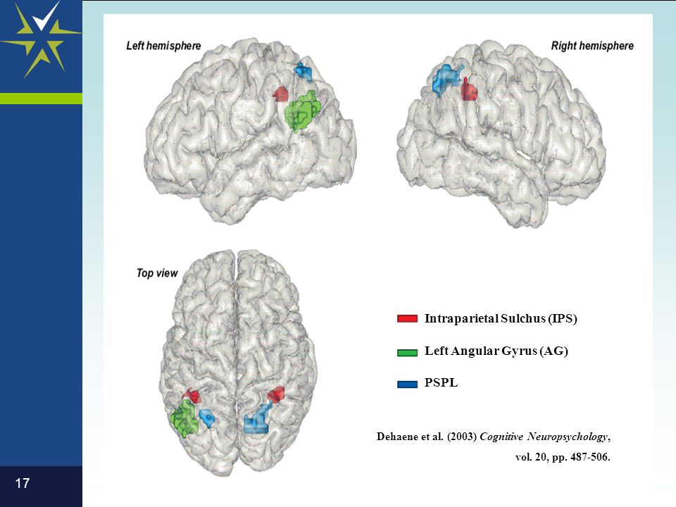 17 Dehaene et al. (2003) Cognitive Neuropsychology, vol. 20, pp. 487-506. Intraparietal Sulchus (IPS) Left Angular Gyrus (AG) PSPL