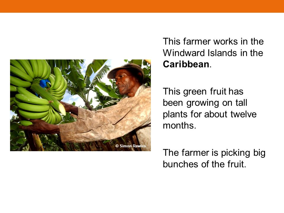 This farmer works in the Windward Islands in the Caribbean.
