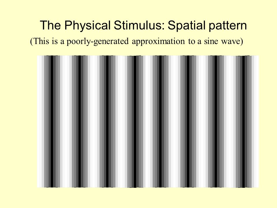 The Physical Stimulus: Spatial pattern (This is a poorly-generated approximation to a sine wave)