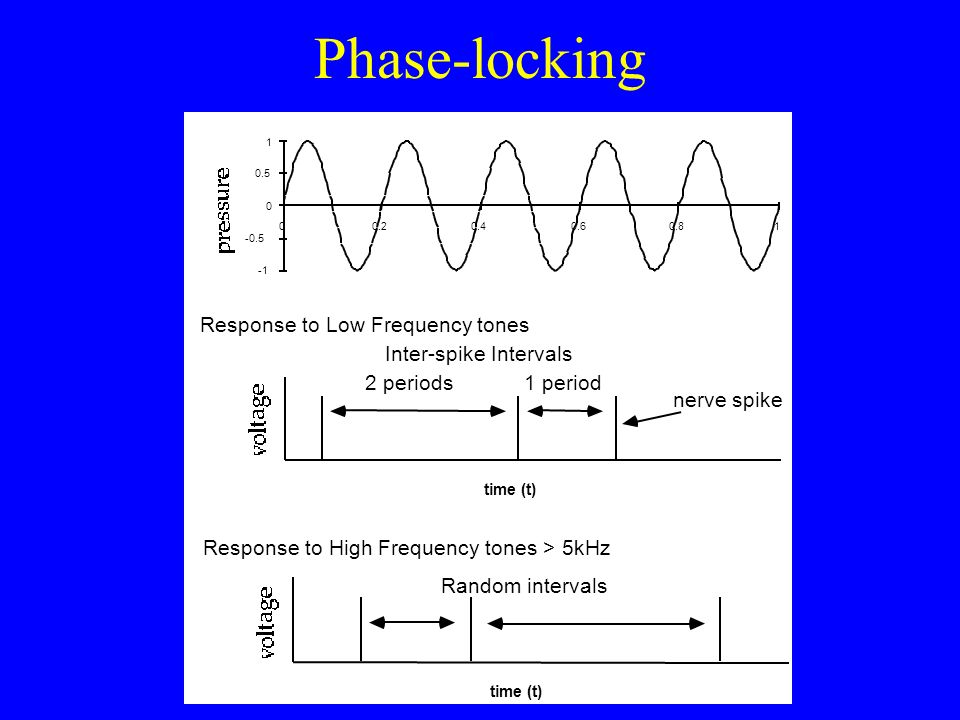 Onset-time versus ongoing phase differences R LR Natural sounds have both Works for high- and low-frequency sounds Does not work for high-frequency pu