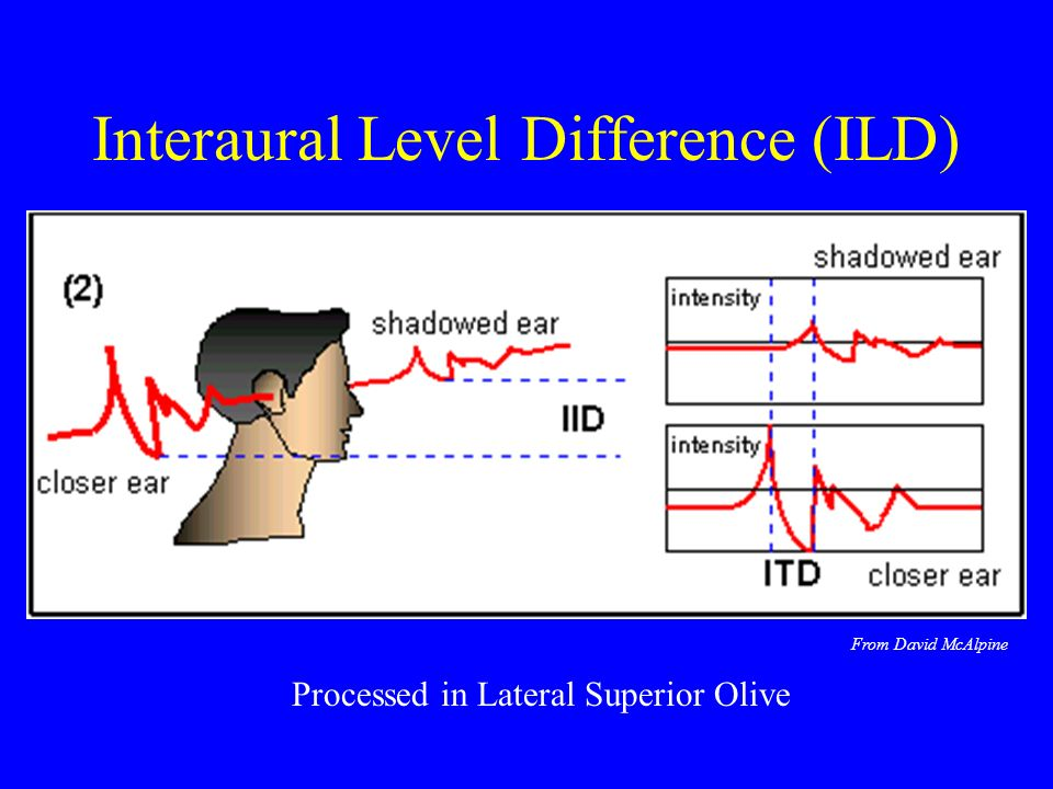 Interaural Level Difference (ILD) Processed in Lateral Superior Olive From David McAlpine