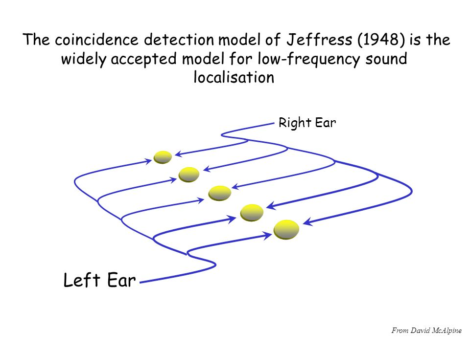 The coincidence detection model of Jeffress (1948) is the widely accepted model for low-frequency sound localisation Left Ear Right Ear From David McAlpine