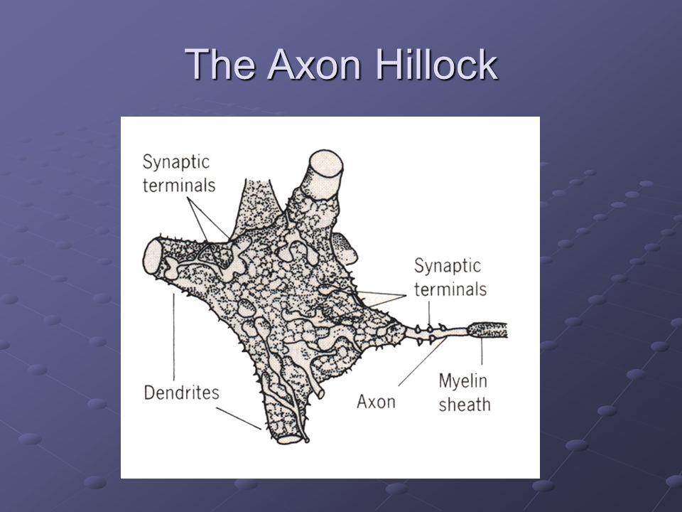 The Axon Hillock