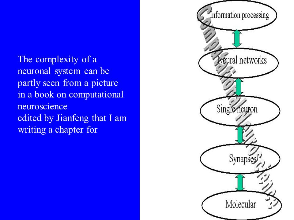 The complexity of a neuronal system can be partly seen from a picture in a book on computational neuroscience edited by Jianfeng that I am writing a chapter for