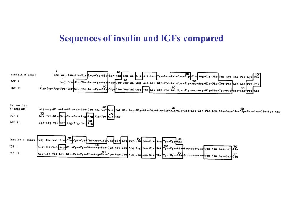 Sequences of insulin and IGFs compared