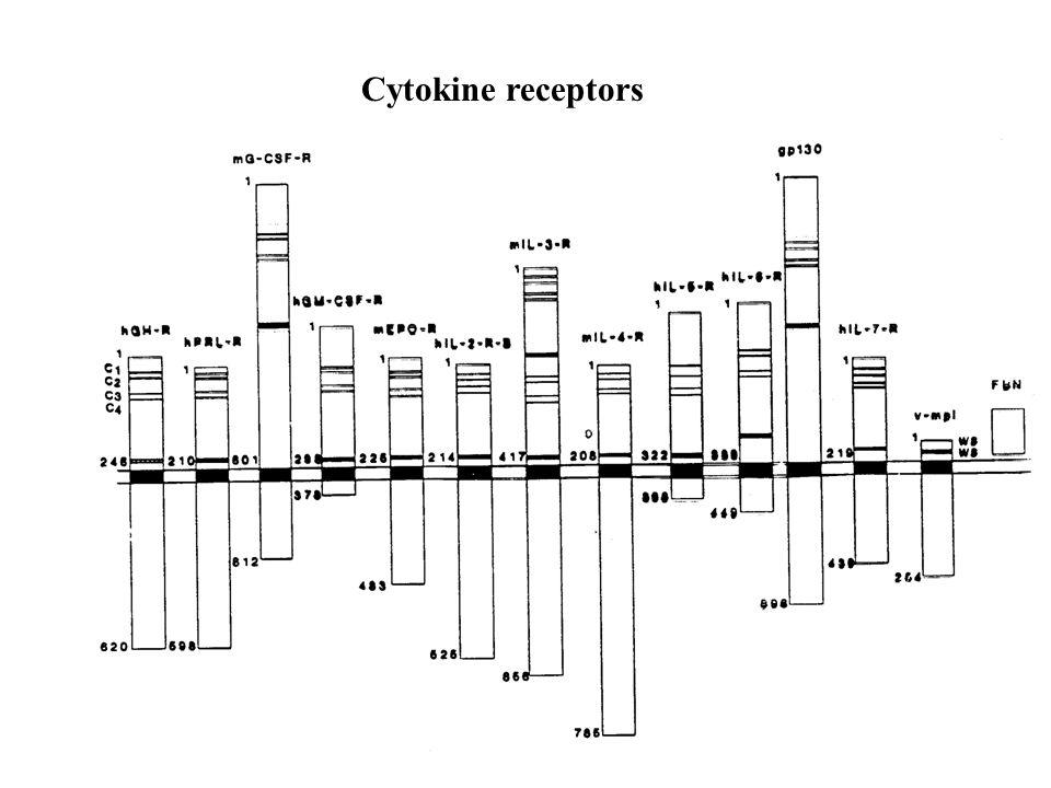 Cytokine receptors
