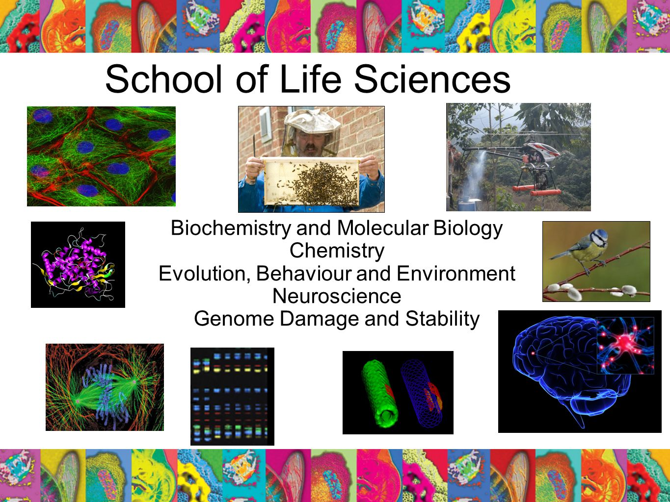 School of Life Sciences Biochemistry and Molecular Biology Chemistry Evolution, Behaviour and Environment Neuroscience Genome Damage and Stability