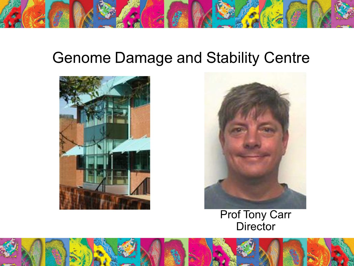 Genome Damage and Stability Centre Prof Tony Carr Director