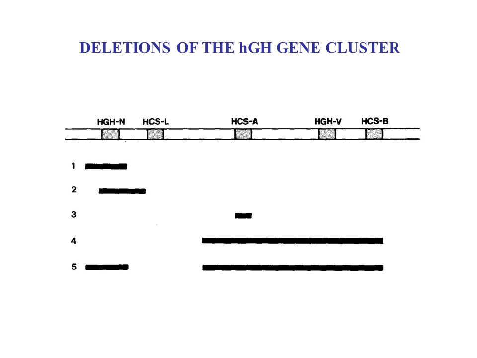 DELETIONS OF THE hGH GENE CLUSTER