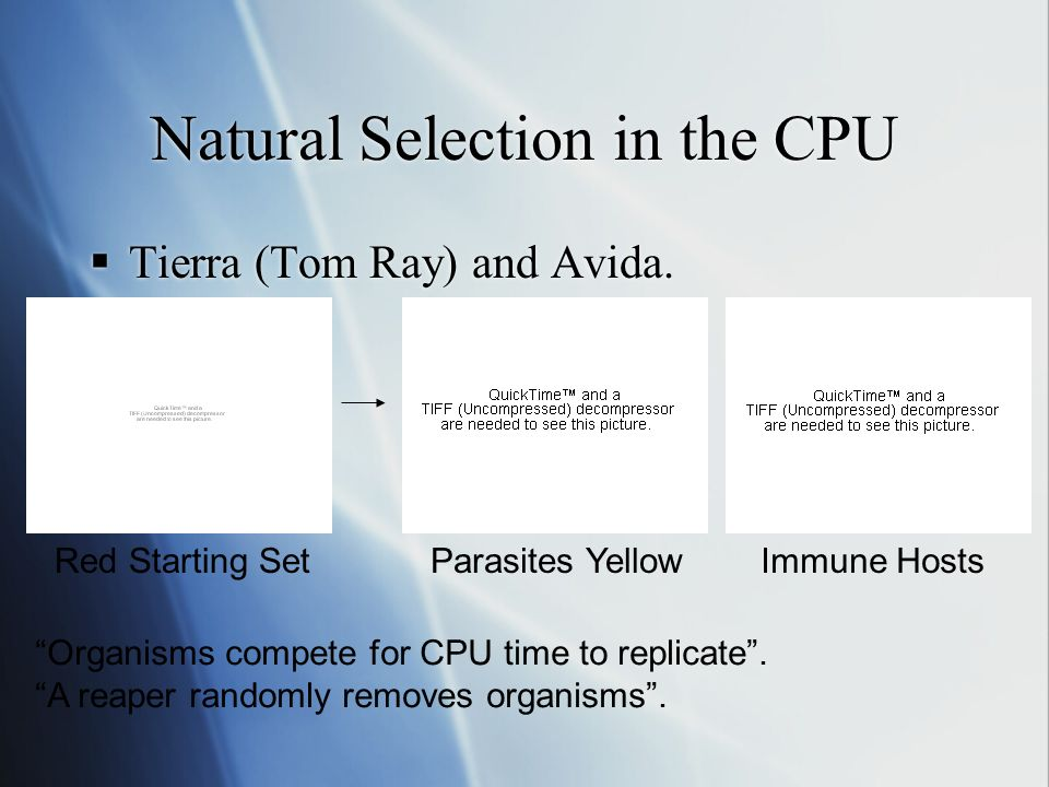 Natural Selection in the CPU Tierra (Tom Ray) and Avida.