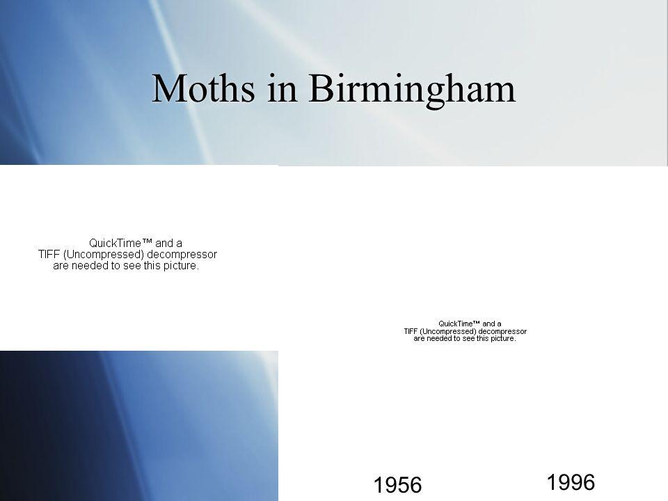 Moths in Birmingham 1956 1996