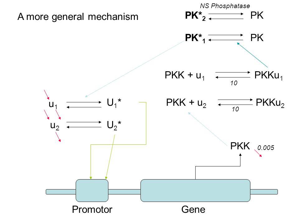 u1u1 u2u2 U2*U2* U1*U1* PKK PK* 2 PK PK* 1 PK PKK + u 1 PKKu 1 PKK + u 2 PKKu 2 Promotor Gene NS Phosphatase 10 0.005 A more general mechanism