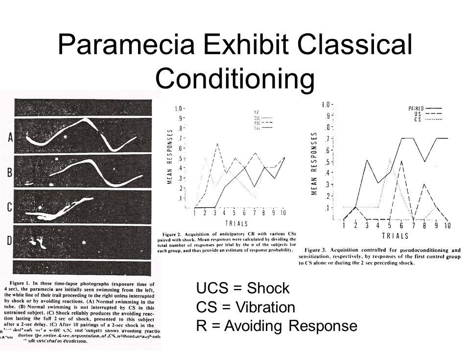 Sensory Mechanisms in Paramecia Mechano: Eckert, Naitoh and Friedman.