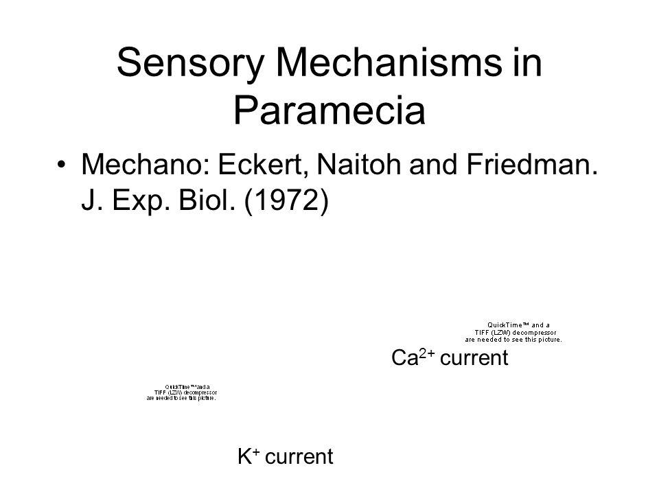 MACHEMER & ECKERT 1973 Applying depolarization produces reversal