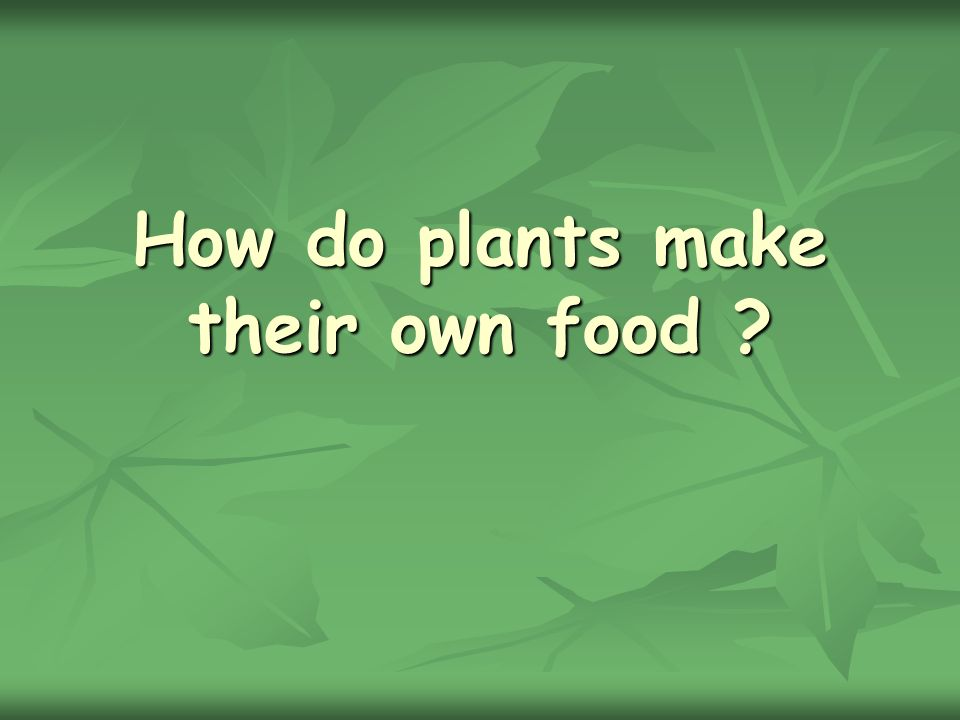 How do plants make their own food ?