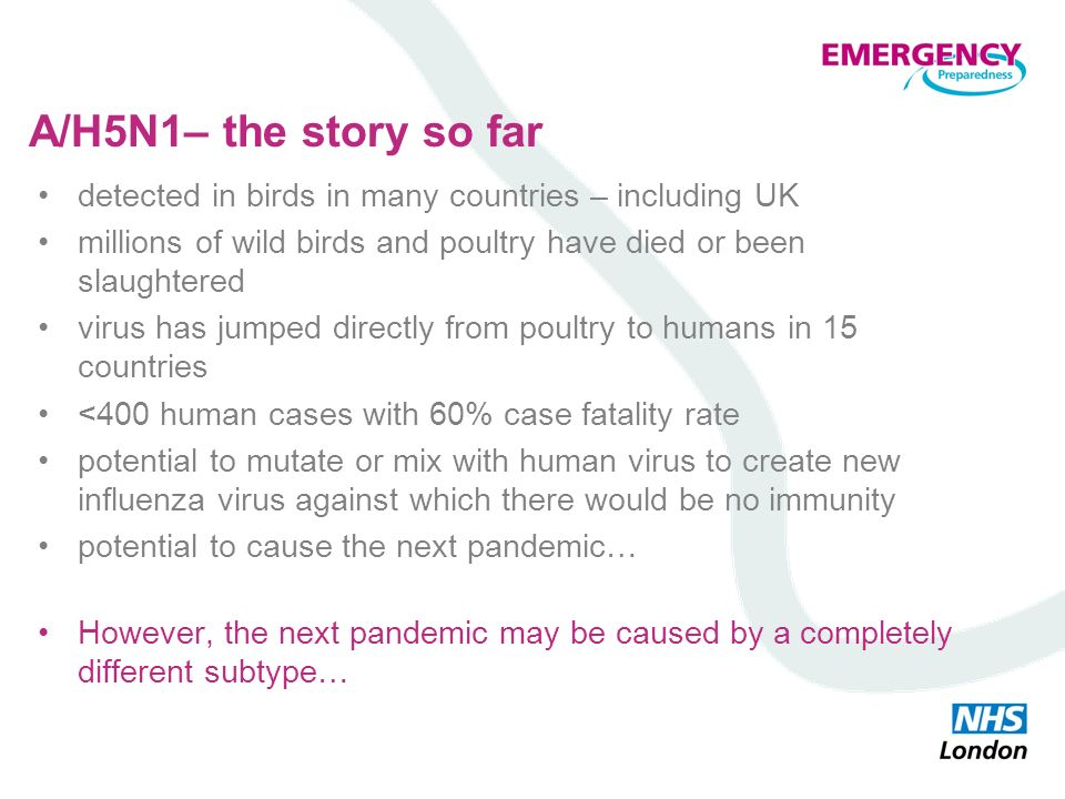 A/H5N1– the story so far detected in birds in many countries – including UK millions of wild birds and poultry have died or been slaughtered virus has