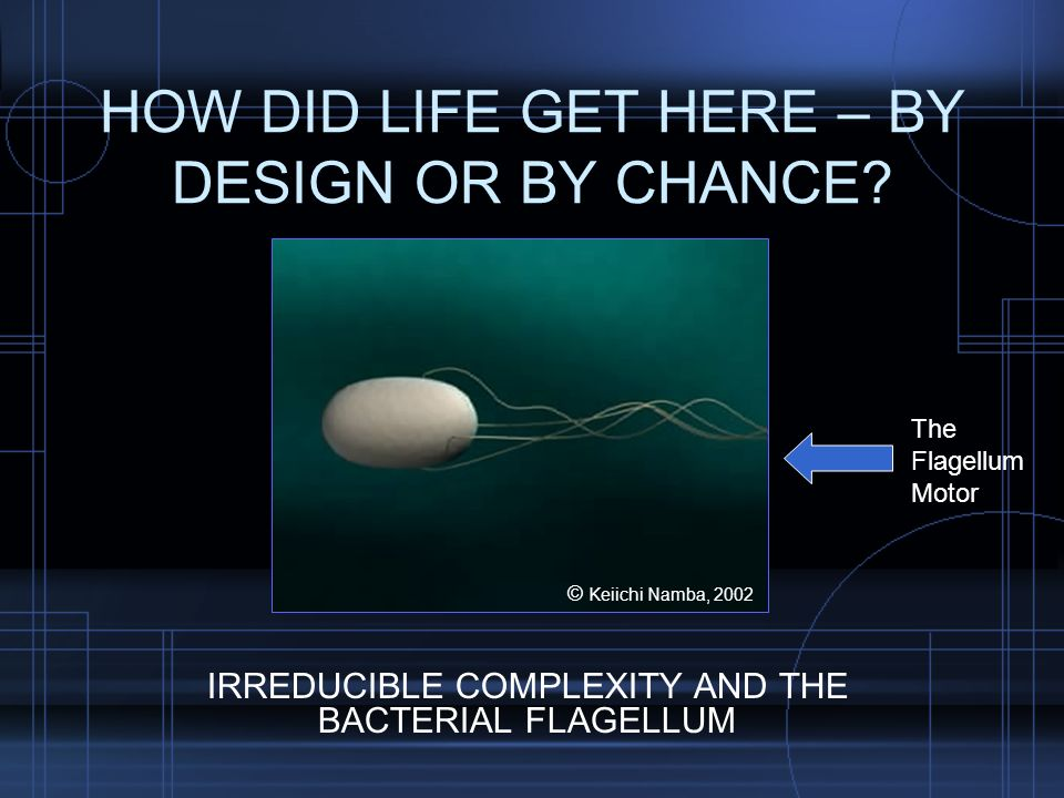 HOW DID LIFE GET HERE – BY DESIGN OR BY CHANCE.