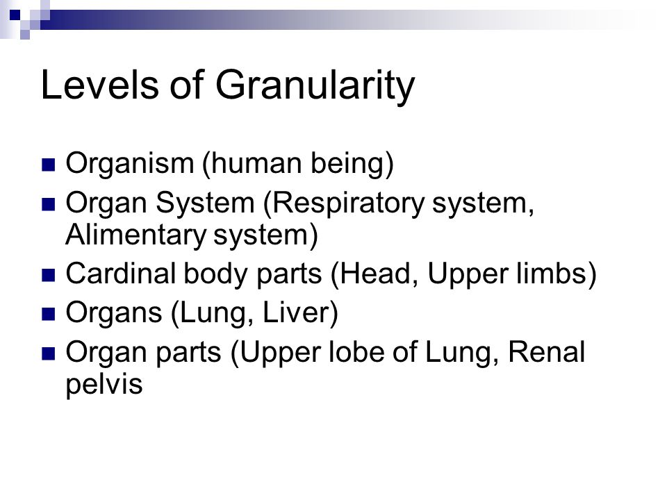 Levels of Granularity Organism (human being) Organ System (Respiratory system, Alimentary system) Cardinal body parts (Head, Upper limbs) Organs (Lung, Liver) Organ parts (Upper lobe of Lung, Renal pelvis