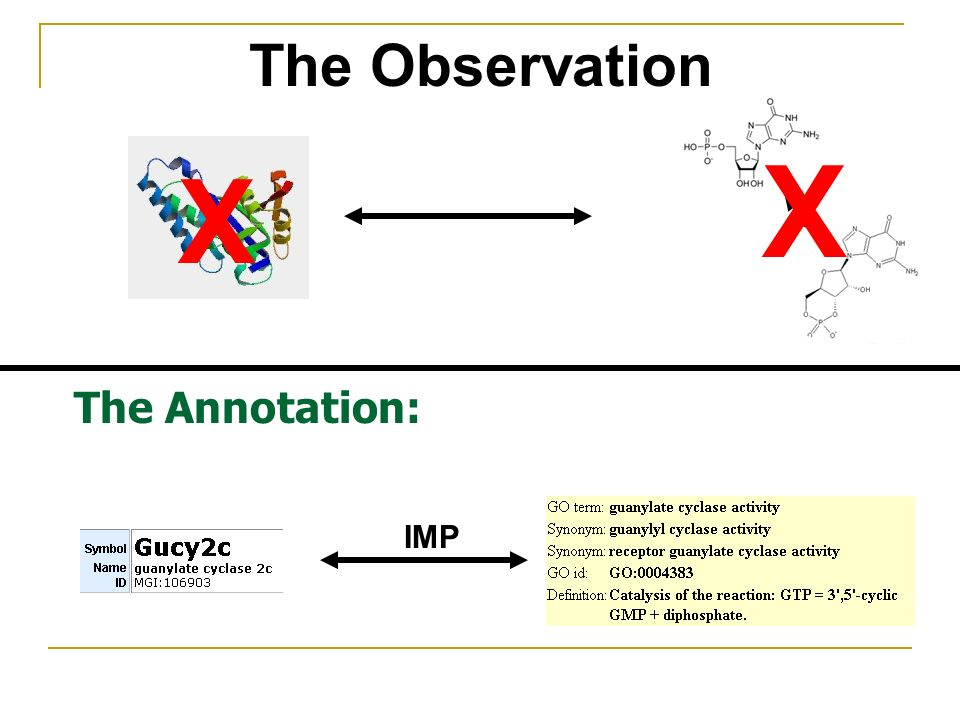 The Annotation: The Observation X X IMP
