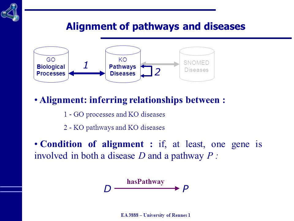 EA 3888 – University of Rennes 1 Alignment of pathways and diseases GO Biological Processes KO Pathways Diseases Condition of alignment : if, at least, one gene is involved in both a disease D and a pathway P : 1 2 SNOMED Diseases Alignment: inferring relationships between : 1 - GO processes and KO diseases 2 - KO pathways and KO diseases D P hasPathway