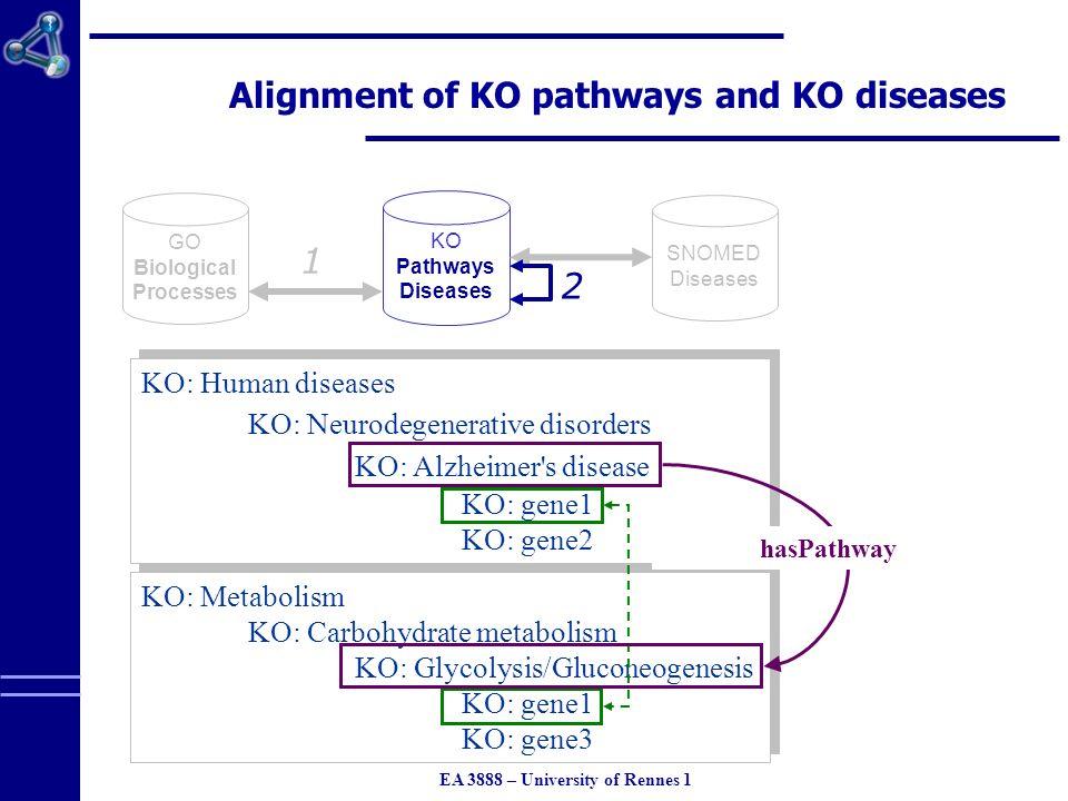 EA 3888 – University of Rennes 1 GO Biological Processes KO Pathways Diseases 1 2 SNOMED Diseases Alignment of KO pathways and KO diseases KO: Metabolism KO: Carbohydrate metabolism KO: Glycolysis/Gluconeogenesis KO: gene1 KO: gene3 KO: Metabolism KO: Carbohydrate metabolism KO: Glycolysis/Gluconeogenesis KO: gene1 KO: gene3 KO: Human diseases KO: Neurodegenerative disorders KO: Alzheimer s disease KO: gene1 KO: gene2 KO: Human diseases KO: Neurodegenerative disorders KO: Alzheimer s disease KO: gene1 KO: gene2 hasPathway