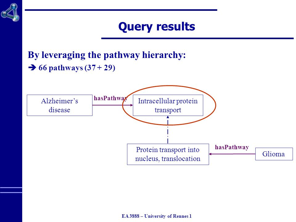 EA 3888 – University of Rennes 1 hasPathway Query results By leveraging the pathway hierarchy: 66 pathways (37 + 29) Alzheimers disease Intracellular protein transport Protein transport into nucleus, translocation Glioma hasPathway