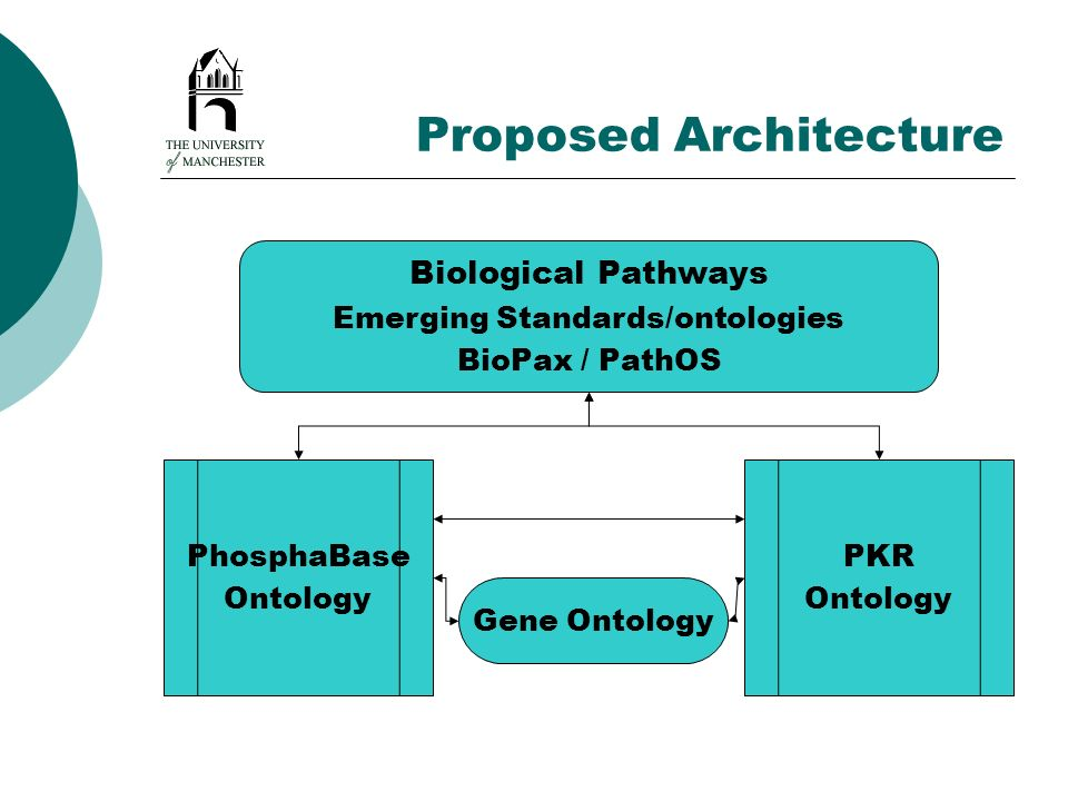 Proposed Architecture PhosphaBase Ontology PKR Ontology Biological Pathways Emerging Standards/ontologies BioPax / PathOS Gene Ontology