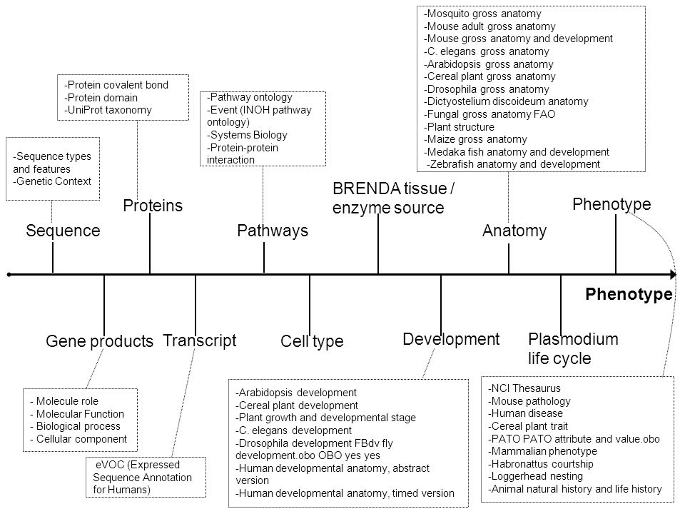 Phenotype Sequence Proteins Gene products Transcript Pathways Cell type BRENDA tissue / enzyme source Development Anatomy Phenotype Plasmodium life cycle -Sequence types and features -Genetic Context - Molecule role - Molecular Function - Biological process - Cellular component -Protein covalent bond -Protein domain -UniProt taxonomy -Pathway ontology -Event (INOH pathway ontology) -Systems Biology -Protein-protein interaction -Arabidopsis development -Cereal plant development -Plant growth and developmental stage -C.