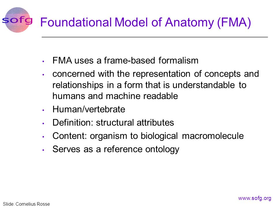 www.sofg.org Foundational Model of Anatomy (FMA) FMA uses a frame-based formalism concerned with the representation of concepts and relationships in a