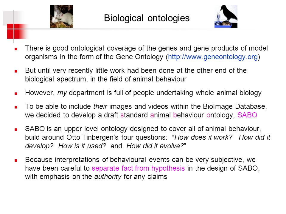 Biological ontologies There is good ontological coverage of the genes and gene products of model organisms in the form of the Gene Ontology (http://www.geneontology.org) But until very recently little work had been done at the other end of the biological spectrum, in the field of animal behaviour However, my department is full of people undertaking whole animal biology To be able to include their images and videos within the BioImage Database, we decided to develop a draft standard animal behaviour ontology, SABO SABO is an upper level ontology designed to cover all of animal behaviour, build around Otto Tinbergens four questions: How does it work.