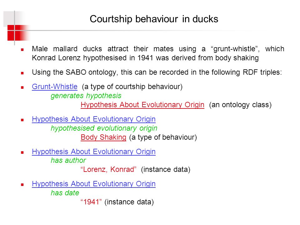 Courtship behaviour in ducks Male mallard ducks attract their mates using a grunt-whistle, which Konrad Lorenz hypothesised in 1941 was derived from body shaking Using the SABO ontology, this can be recorded in the following RDF triples: Grunt-Whistle (a type of courtship behaviour) generates hypothesis Hypothesis About Evolutionary Origin (an ontology class) Hypothesis About Evolutionary Origin hypothesised evolutionary origin Body Shaking (a type of behaviour) Hypothesis About Evolutionary Origin has author Lorenz, Konrad (instance data) Hypothesis About Evolutionary Origin has date 1941 (instance data)