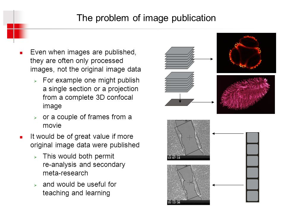 The problem of image publication Even when images are published, they are often only processed images, not the original image data For example one might publish a single section or a projection from a complete 3D confocal image or a couple of frames from a movie It would be of great value if more original image data were published This would both permit re-analysis and secondary meta-research and would be useful for teaching and learning