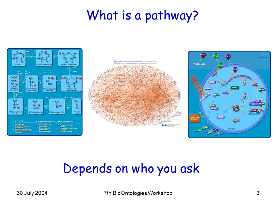 30 July 20047th BioOntologies Workshop3 What is a pathway Depends on who you ask