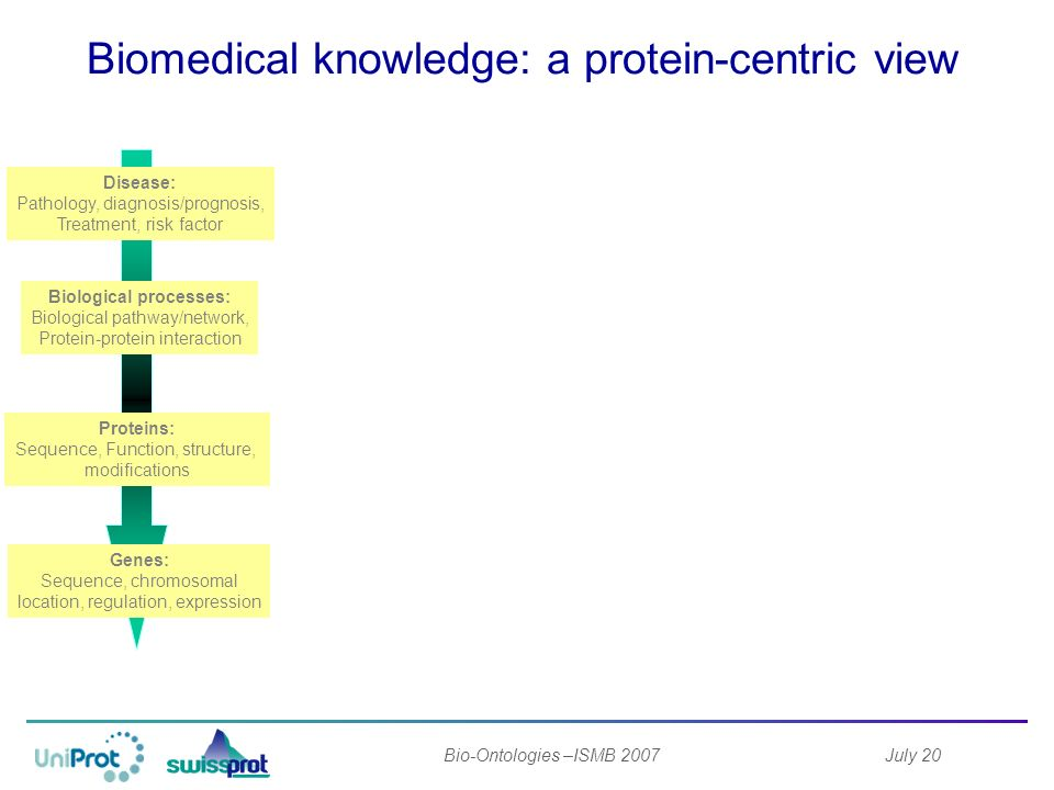 July 20Bio-Ontologies –ISMB 2007 Biomedical knowledge: a protein-centric view High quality manual annotation.