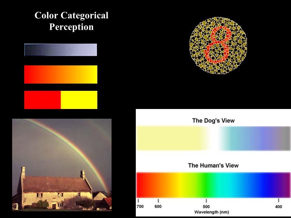 Color Categorical Perception