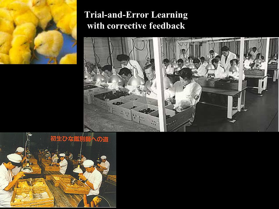 Trial-and-Error Learning with corrective feedback