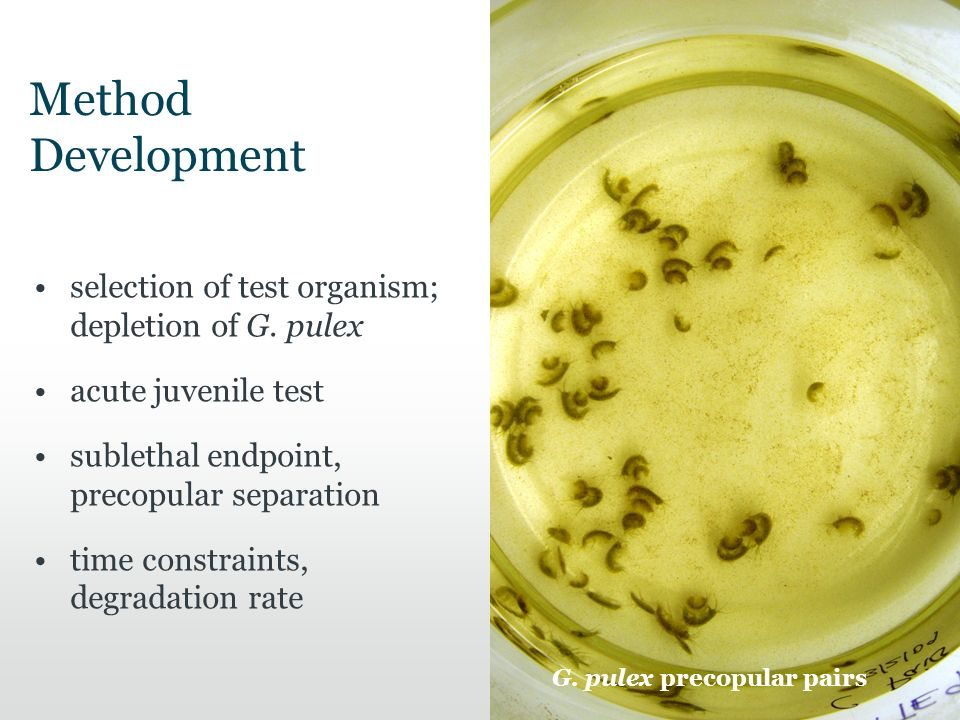 Method Development selection of test organism; depletion of G.