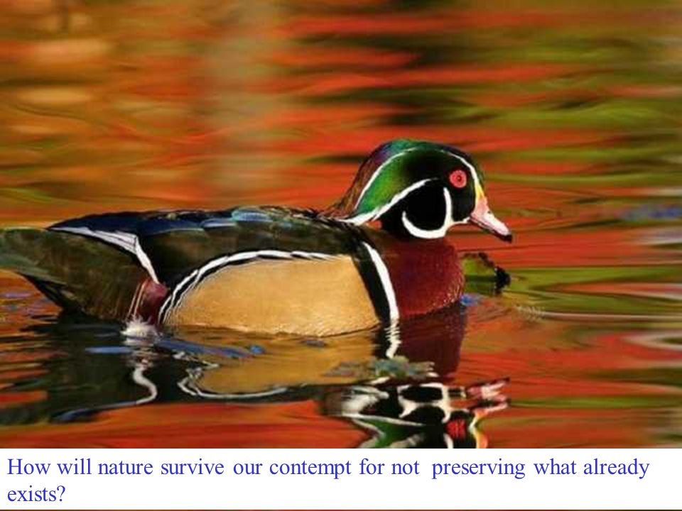 How will nature survive our contempt for not preserving what already exists?
