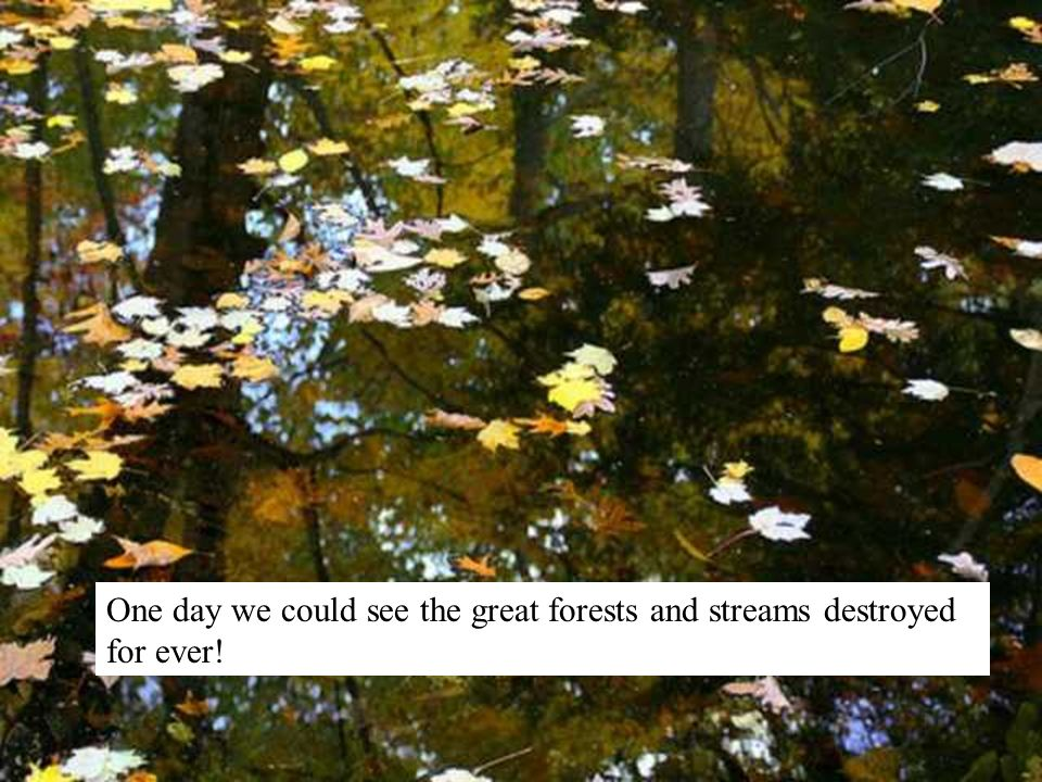 One day we could see the great forests and streams destroyed for ever!
