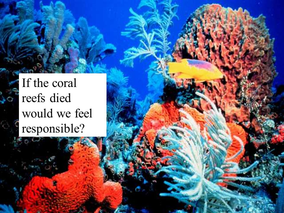 If the coral reefs died would we feel responsible?