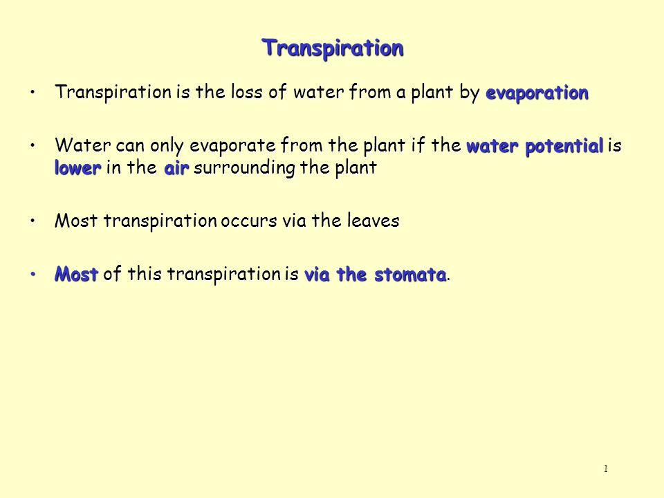 1 Transpiration Transpiration is the loss of water from a plant by evaporationTranspiration is the loss of water from a plant by evaporation Water can