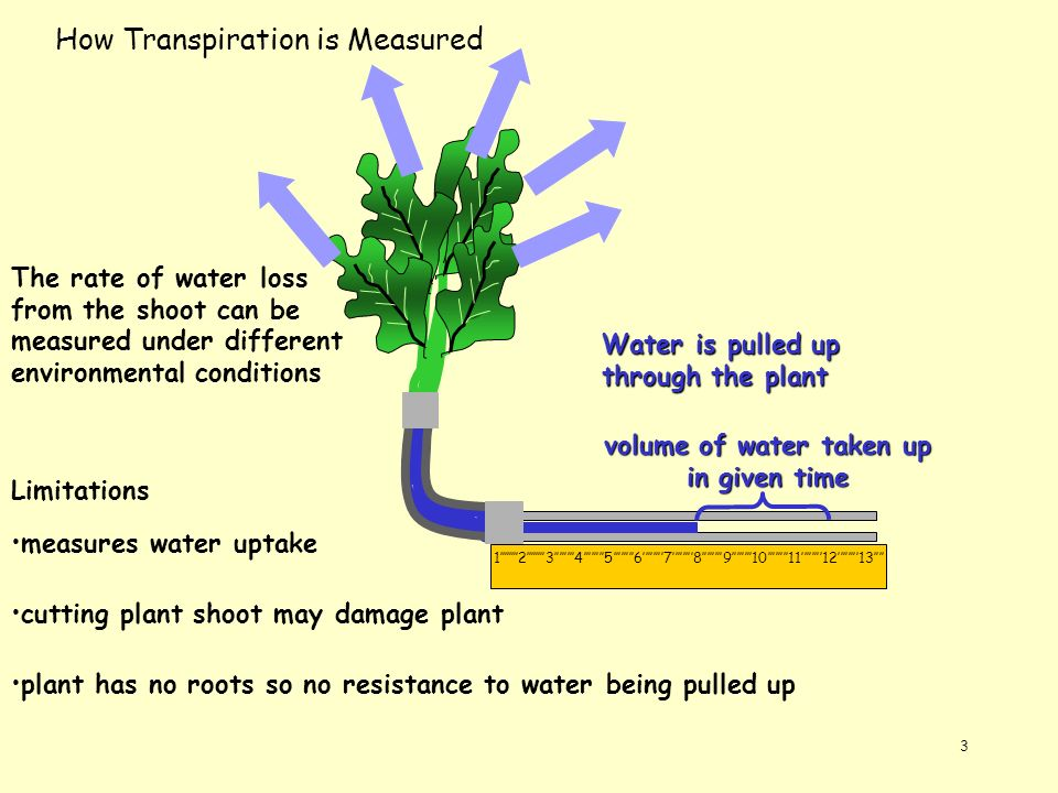 3 How Transpiration is Measured 12345678910111213 The rate of water loss from the shoot can be measured under different environmental conditions volum