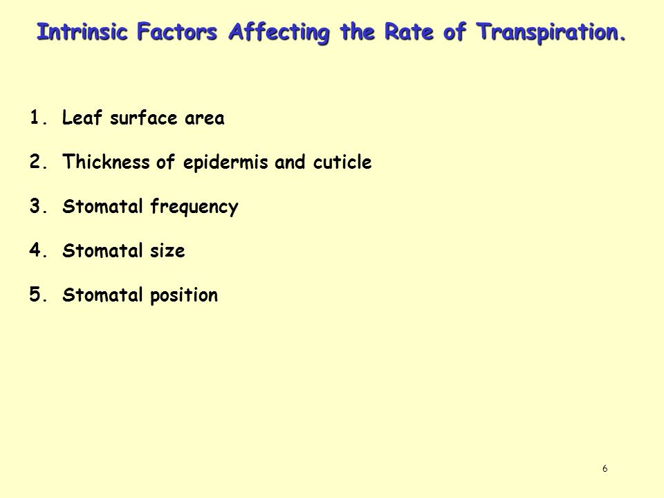6 Intrinsic Factors Affecting the Rate of Transpiration. 1.Leaf surface area 2.Thickness of epidermis and cuticle 3.Stomatal frequency 4.Stomatal size